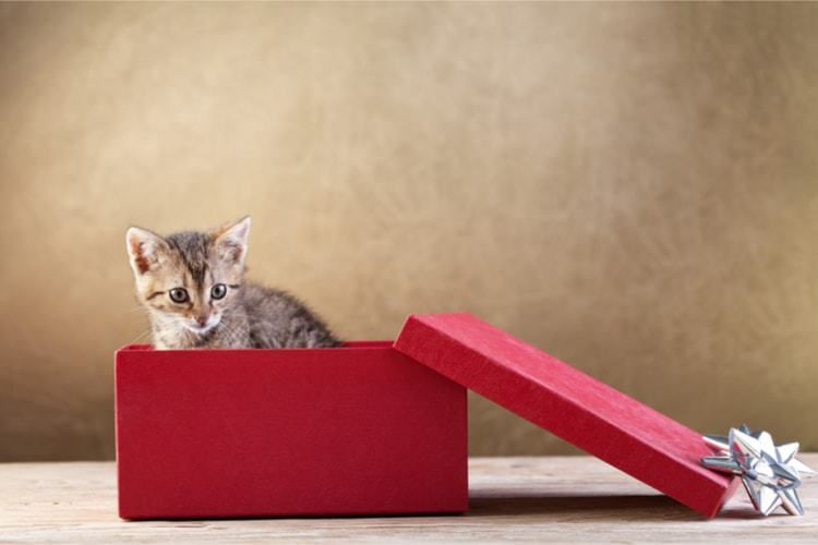 The Best Unique Gifts for Cat Lovers 2019 Reviews