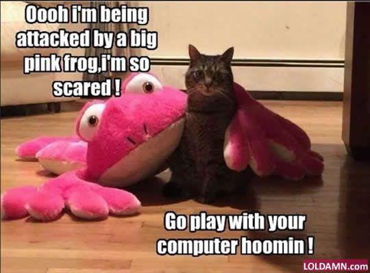 funny cat memes pink frog