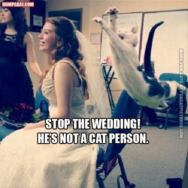 funny cat pictures stopthewedding