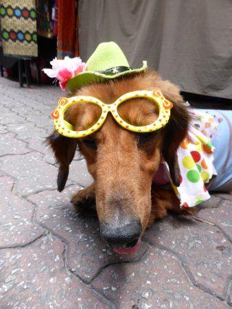 Gaya Street Sunday Market Funny dog at the markets