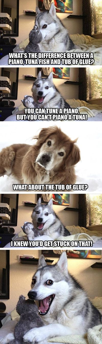 15 Pun Husky Meme s are Insanely Cute Dose of Funny
