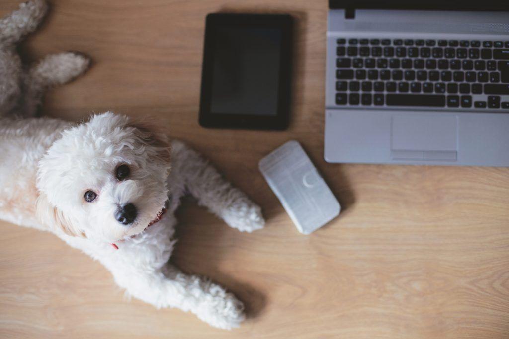 10 Websites Every New Dog Owner Should Bookmark