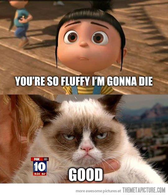 funny so fluffy cat meme