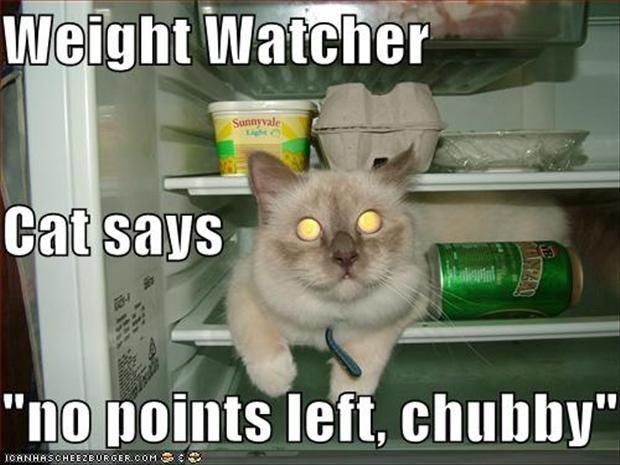 funny fat cats