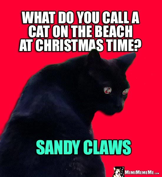 Xmas Cat Joke What do you call a cat on the beach at Christmas time
