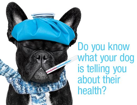 Do you know what your dog is telling you about their health