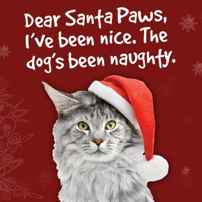 Gather the Beautiful Funny Cat and Dog Christmas Pictures