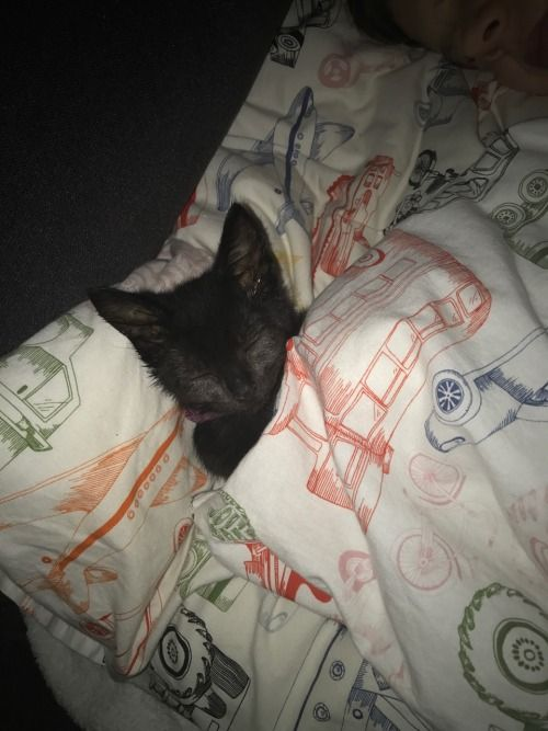 You were visited by the magic kitten of rest Reblog to have a good night s sleep