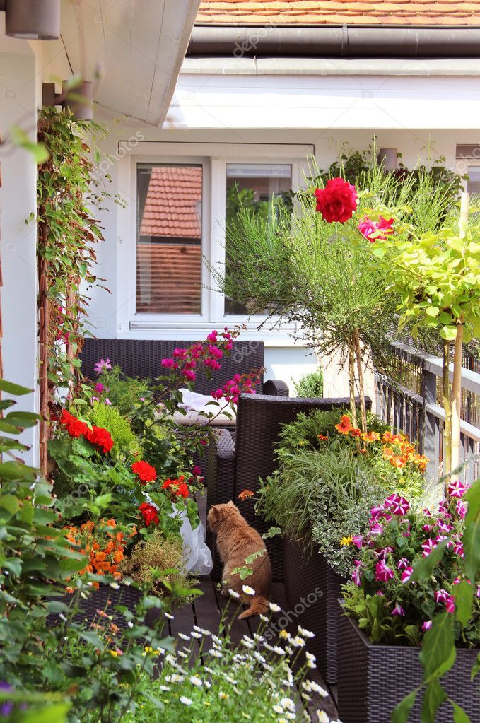 Beautiful modern terrace with a lot of flowers and funny cat — by tannjuska