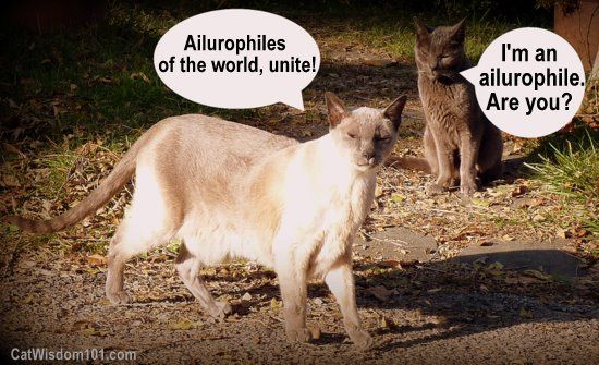 ailurophile cats funny cute New Top 10 Cat Words