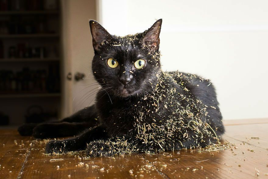 Funny Cats High Catnip Tweet catnip011