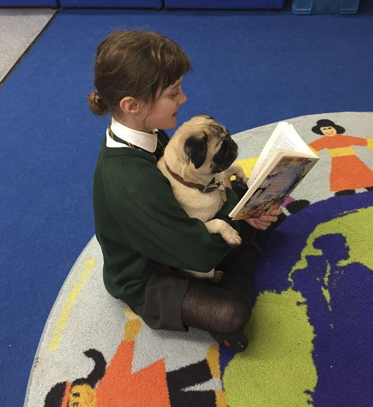 310d9c0a bf9d funny pugs make a difference
