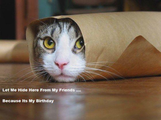 cat happy birthday meme funny