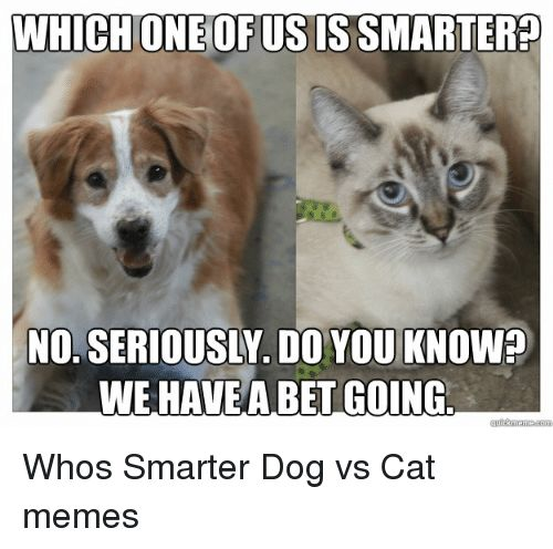 Cats Dogs and Funny WHICH ONEOFUSISSMARTERED WE HAVE A BETGOING Whos Smarter Dog