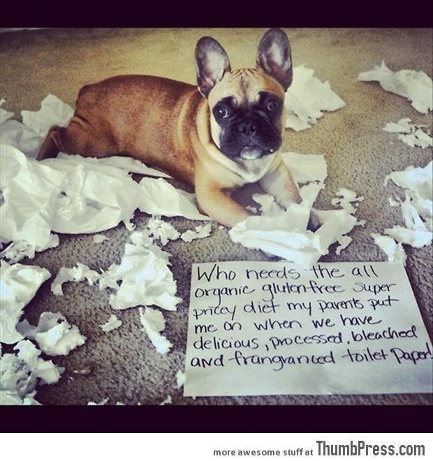 bad dog notes 21