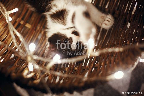 Cute kitty playing in basket with lights under christmas tree in festive room Adorable funny kitten with amazing eyes Merry Christmas concept