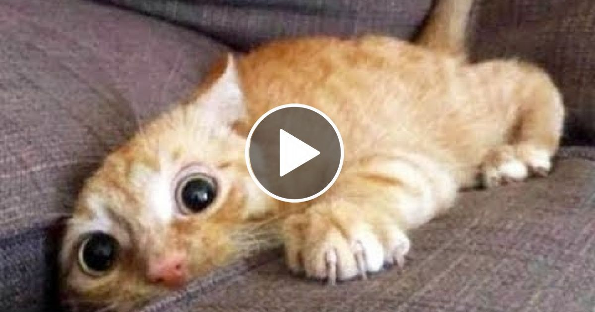 Top 200 Highlights of Animals on Vine FUNNY Animals