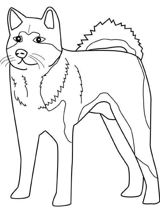 husky coloring book