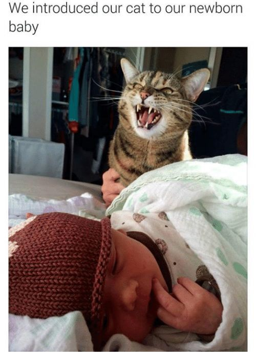Baby It s Cold Outside Cats and Grumpy Cat We introduced our cat