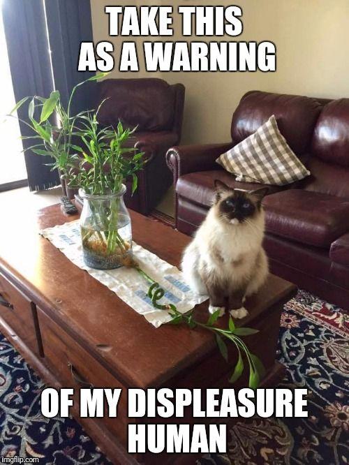 Cat Warning