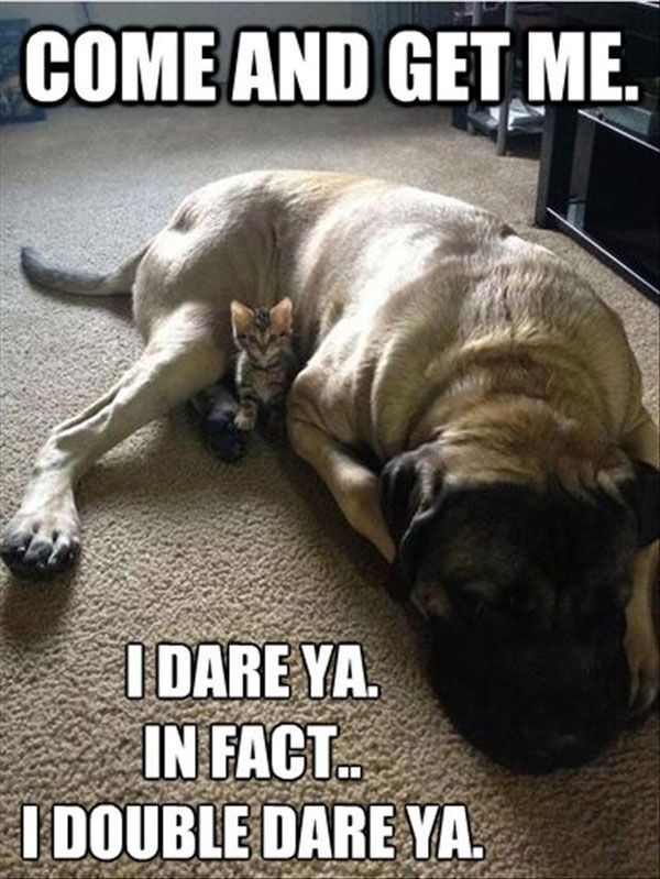funny picture of cat and dog dogsfunnyjokes