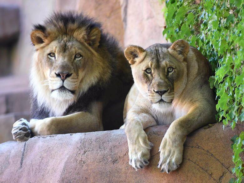 Image via Brookfield Zoo