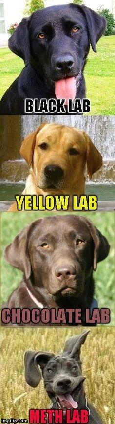 Funny labrador with meme labrador funny meme Baby Memes Äá ™ng Vật Ngá ™