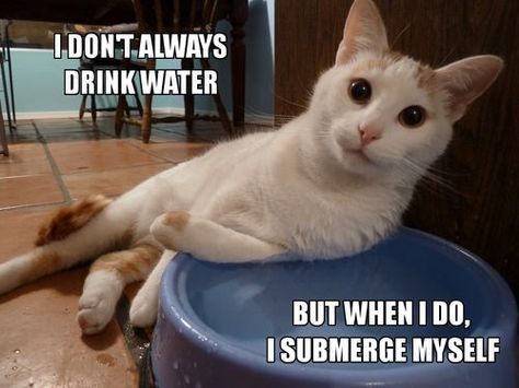 Even your cat wants you to have a water filter cleanwater catmeme
