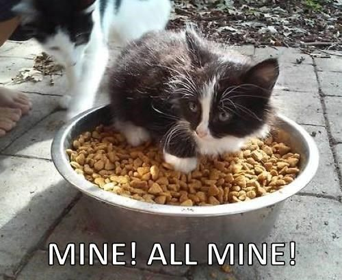 Gather the Elegant Funny Cat Memes Food