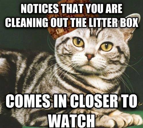 When We Clean The Litter Box