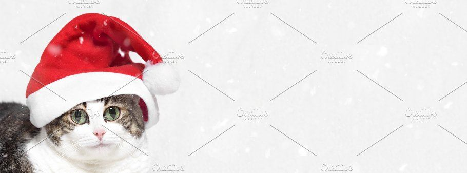 Christmas banner big eyes funny cat