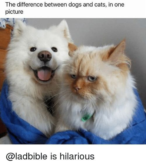 Gather the Elegant Funny Pet and Owner Pictures Cat