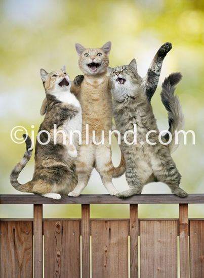 Funny Lol Cat Picture of Three Kitties Singing To her on Top of a fence