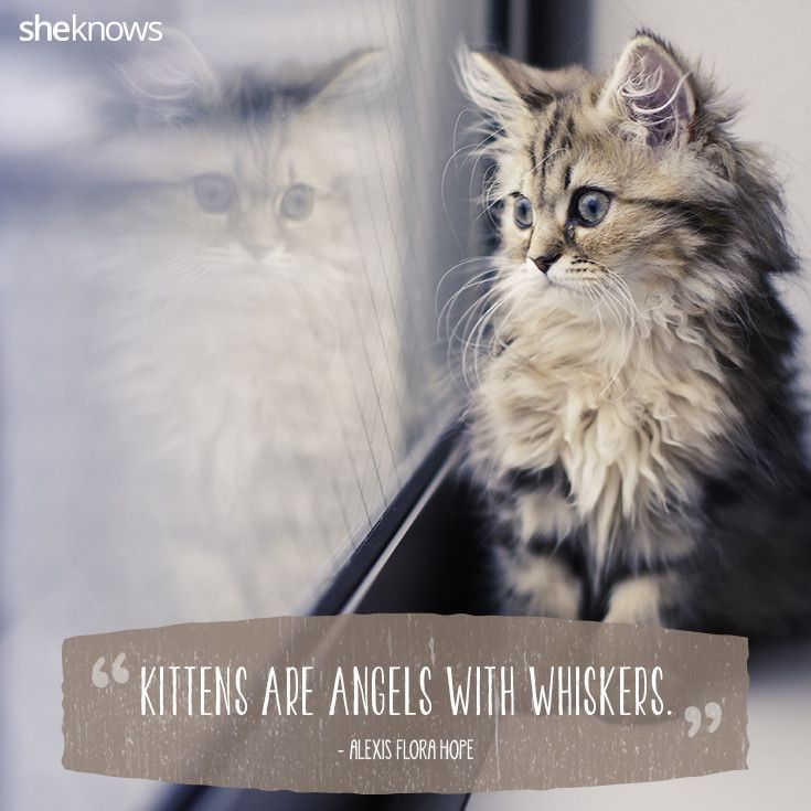 Funny cat quotes and sayings cat quotes images hd