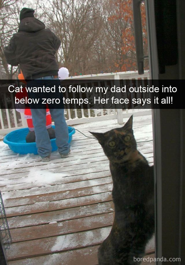 Gather the Fascinating Funny Cat Memes Imgur