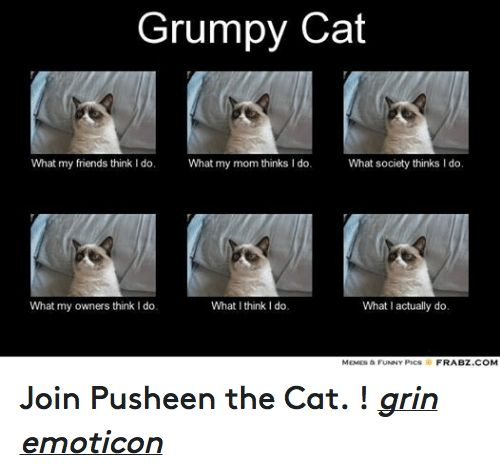Gather the Fascinating Funny Cat Memes Kittens