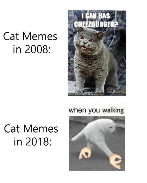 Gather the Fascinating Funny Cat Memes Twitter