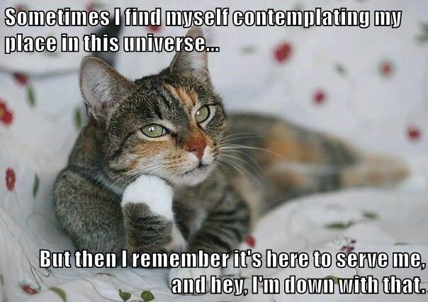 animals cat universe me contemplating caption serve