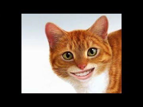 FUNNY CAT HUMAN MOUTH