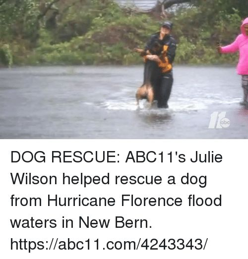 Memes Hurricane and 🤖 DOG RESCUE ABC11 s Julie Wilson helped rescue a