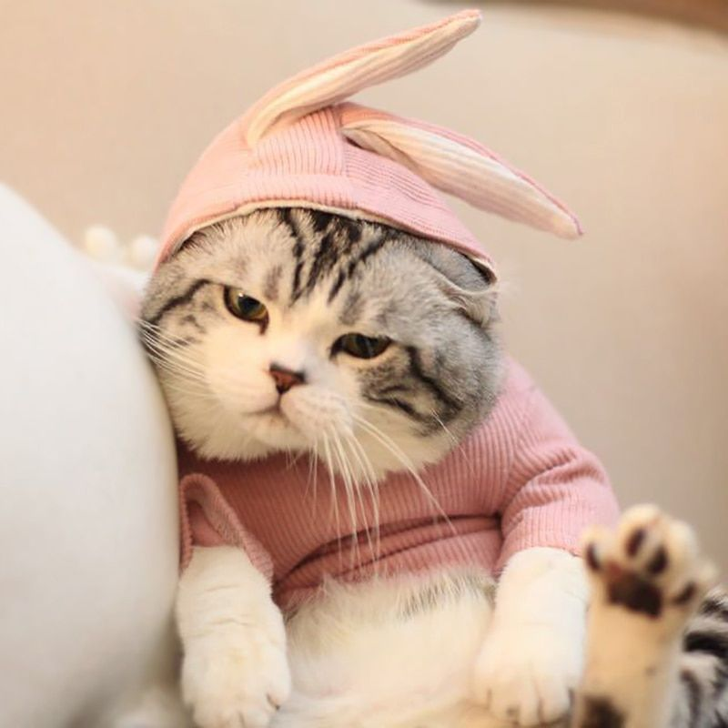 Funny Cat Costume Rabbit Style Pet Hoody Winter Clothes For Dogs Halloween Christmas Suit For Cats