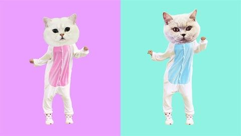Dancing funny cats Boy and Girl power