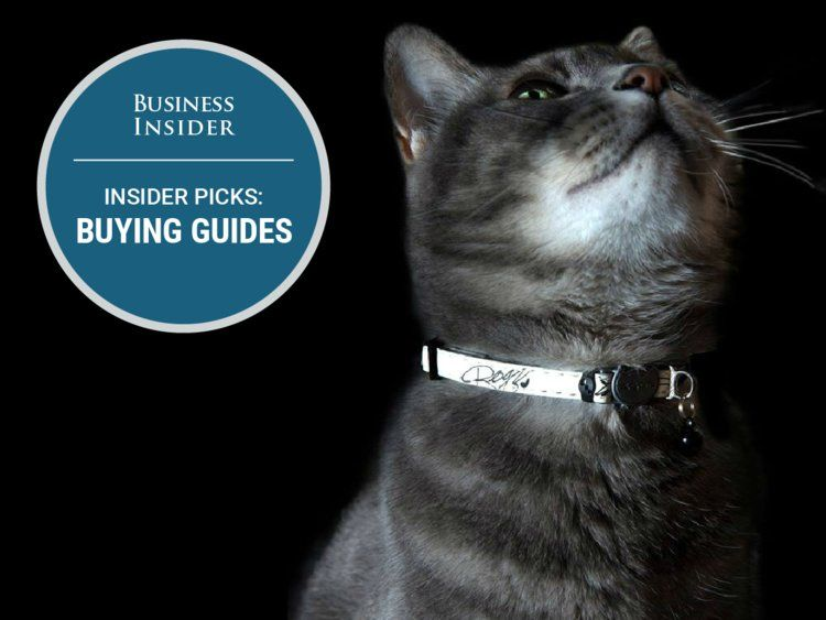 The best cat collars you can