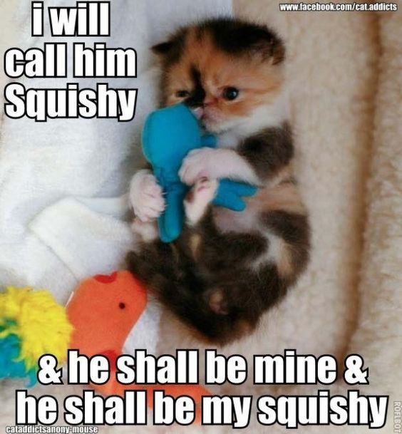 9 funny cat pictures with captions