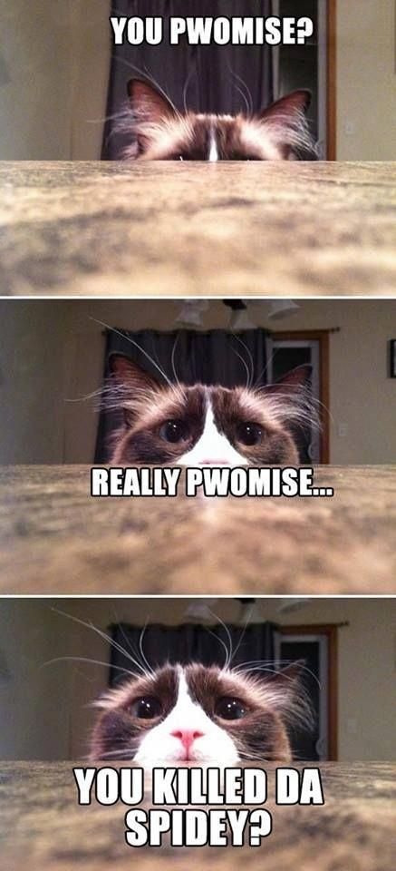 """funny cat memes – Google Search CatMemes explore Pinterest"""" CatMemes cutepictures"""