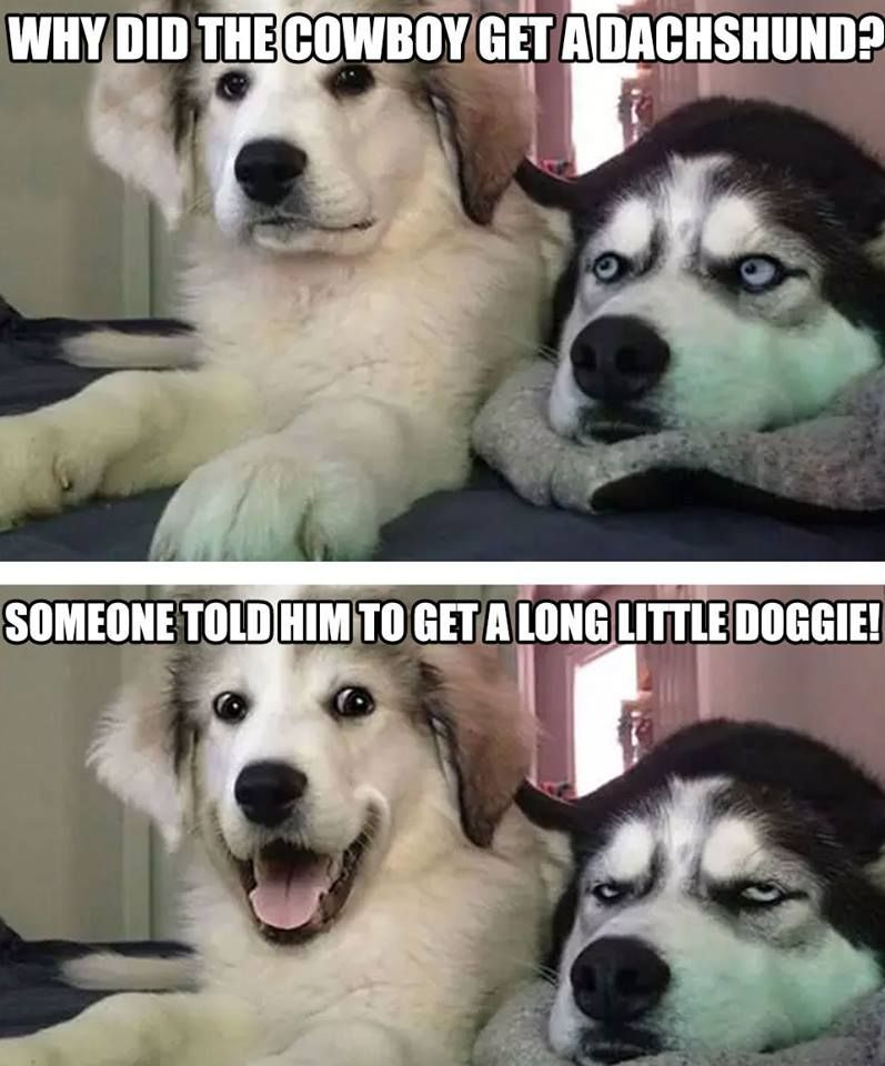 Funny Dogs Funny Animal Memes Funny Animals Funny Memes Hilarious Puns