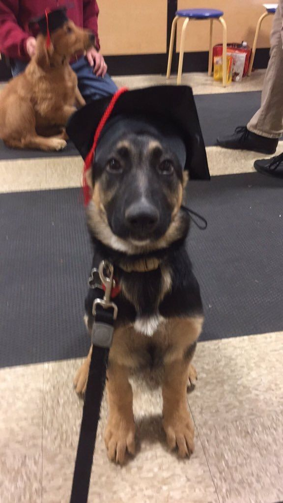 Graduation from puppy training school ❤️