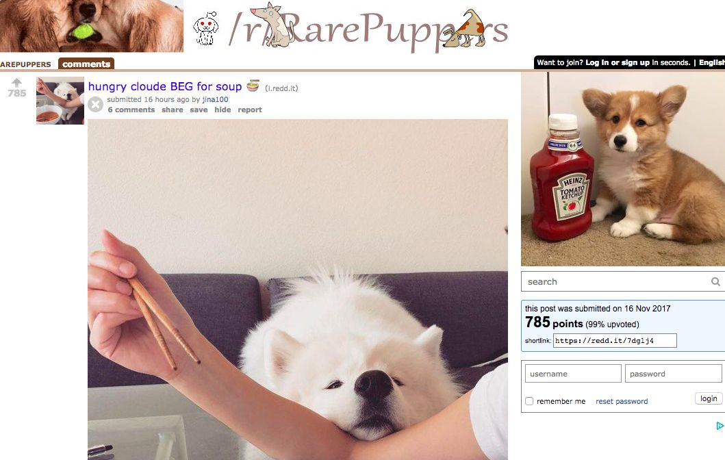The 12 Best Animal Subreddits in e Ranked List From Cute To Bizarre