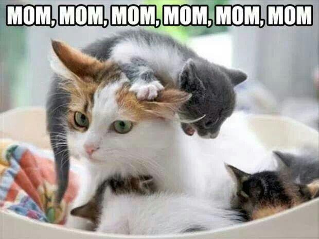 Funny kitty looks like human with kids