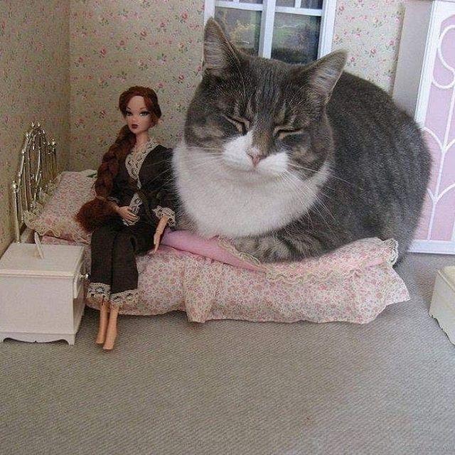 cats catmemes cursed cursedcat plskillme kittens chunkycat catsofinstagram cutecats cutekittens catlover catto cursedimage